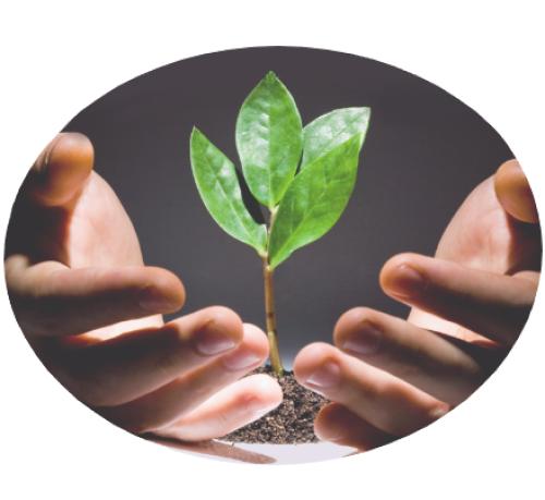 Handen groeiende plant vierkant